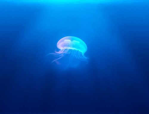 Jellyfish medical findings
